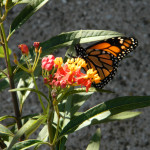 Gardens-Monarch-1211WEB